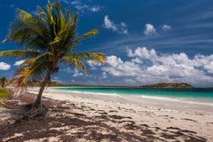 Strand von Anse Trabaud, Martinique Lizenzfreie Stockbilder