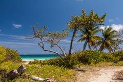 Strand von Anse Trabaud, Martinique Lizenzfreies Stockbild