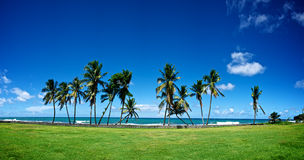 Strand-vordere Palmen Stockfoto