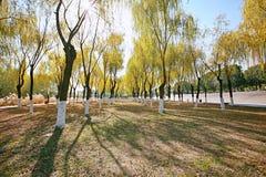 Strand Wuhans Wuchang Lizenzfreie Stockfotos