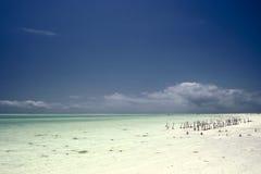 strand zanzibar Royaltyfri Bild