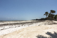 Strand in Zanzibar Stock Afbeelding