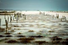 Strand in Zanzibar met stokken en lijnen om kelp te vangen royalty-vrije stock foto