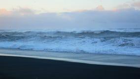 Strand zwart oceaanijsland stock footage