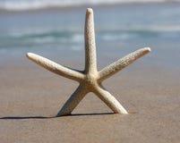 strandad sjöstjärna Royaltyfria Bilder