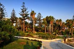 strandaftonträdgård fotografering för bildbyråer