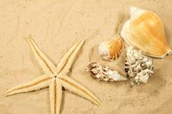 Strandbakgrund Royaltyfri Foto