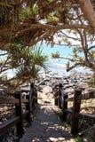 Strandbanan till stenig shoreline som skuggas med pandanusen, gömma i handflatan arkivfoton