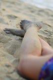 strandben Arkivfoto