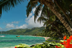 strandblommalagunen gömma i handflatan paradistrees Arkivfoton