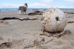 Strandboje und -hund im Hintergrund Lizenzfreie Stockfotos