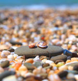 strandbubblaskal Arkivfoto