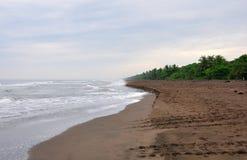 strandCosta Rica tortuguero Arkivfoto