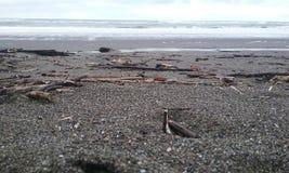 stranddagflicka little seende vatten Royaltyfri Foto