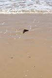 stranddetaljsten Arkivbilder