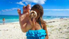 Stranddjurliv Royaltyfria Foton