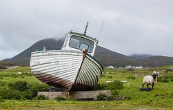 Stranded boat on a Scottish green field with sheep on the side Royalty Free Stock Image