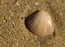 Stranded clam shell Royalty Free Stock Photography