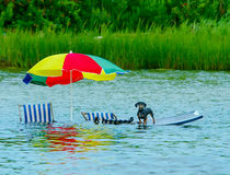 Stranded dog at high tide. Dog had the right idea when the tide came in Stock Images