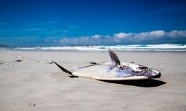 Stranded Mola Mola Sunfish Stock Photo
