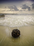 Stranded nypa fruticans near the beach with sunrise background Royalty Free Stock Image