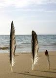 stranden befjädrar tre arkivbilder