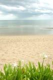 stranden blommar gröna hinhua växter thailand arkivbild
