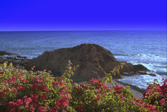 stranden blommar laguna Arkivfoto