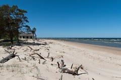 Stranden för det baltiska havet med vaggar och gammalt trä royaltyfria bilder