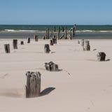 Stranden för det baltiska havet med vaggar och gammalt trä Royaltyfria Foton