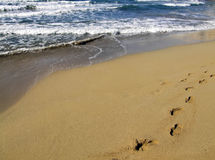 stranden går Royaltyfri Bild