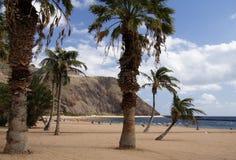 stranden gömma i handflatan royaltyfri foto