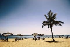 stranden gömma i handflatan Arkivbilder