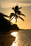 stranden gömma i handflatan silhouettesolnedgångtreen Royaltyfri Foto