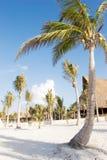 stranden gömma i handflatan vita sandtrees Arkivbilder