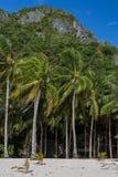 stranden gömma i handflatan vita sandtrees Royaltyfri Foto