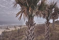 stranden g?mma i handflatan royaltyfria foton