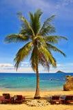 stranden gömma i handflatan Royaltyfri Fotografi