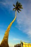 stranden med kokosnöten gömma i handflatan mot blå himmel Royaltyfria Foton