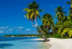 Stranden med mycket gömma i handflatan och vit sand Royaltyfri Foto