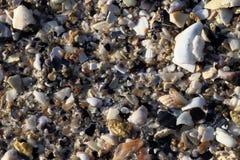 Stranden med olika havsskaldelar fotografering för bildbyråer