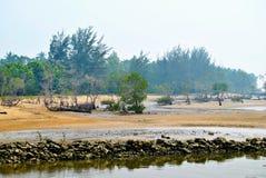 Stranden med sörjer trädet Royaltyfri Bild
