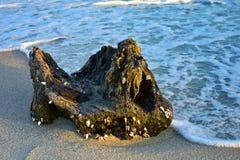 Stranden med stort vaggar p? stranden royaltyfria foton