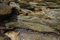 Stranden med vaggar och stenar royaltyfria bilder
