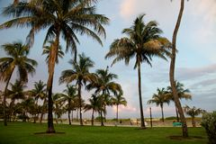stranden miami gömma i handflatan solnedgång Royaltyfria Bilder
