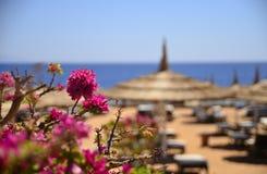 Stranden och havet Royaltyfri Bild
