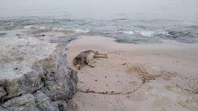 Stranden och katten vågljudet stock video