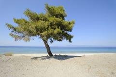 stranden sörjer Arkivbild