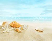 stranden shells sjöstjärnan royaltyfria bilder