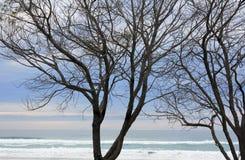stranden silhouettes treen Arkivbild